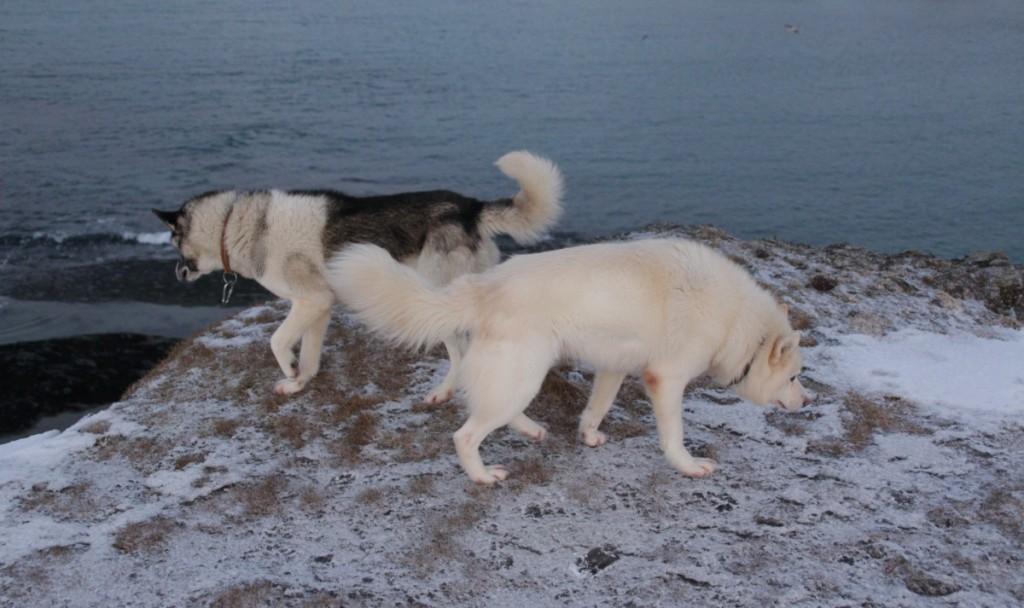 Eerkki og Aki liker seg i nærområdet